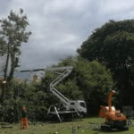 Tree Felling Norwich