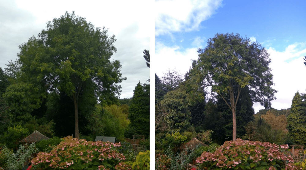 Tree Reduction Norwich
