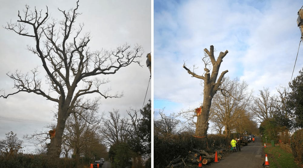 Tree Surgeon Norwich