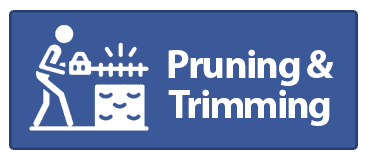 pruning and trimming